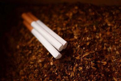 Tytoń i papierosy, najlepsze tytonie do zwijania papierosów